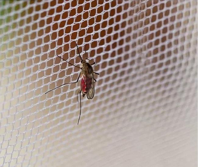 Zasłony moskitiery siatki.